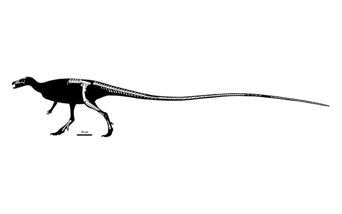 Leaellynasaura amicagraphica Rigorous Skeletal by PLASTOSPLEEN