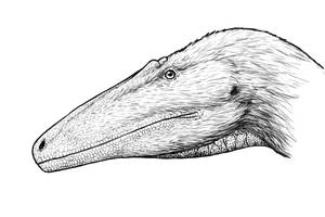 Australovenator Portrait