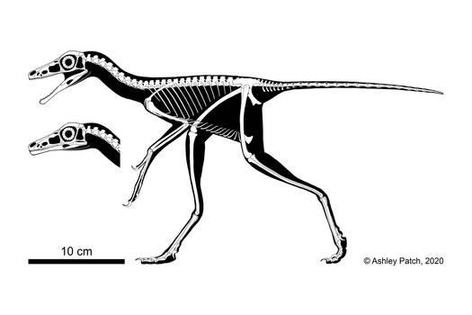 Caihong juji Skeletal