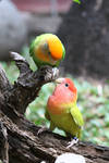 Will you be my lovebird?