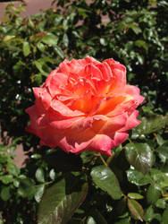 Albuquerque Bloom