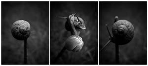 apocalypse snail
