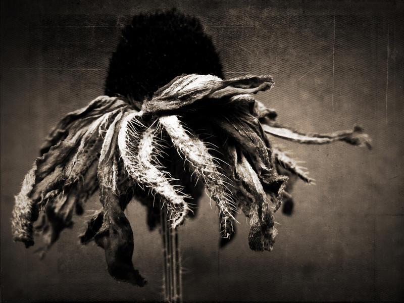 les oripeaux by baspunk