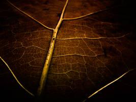 plain leaf by baspunk