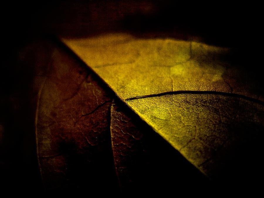 automne by baspunk