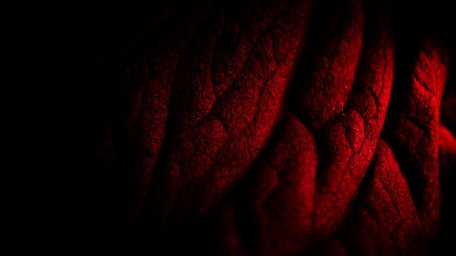 a squeaky red leaf by baspunk