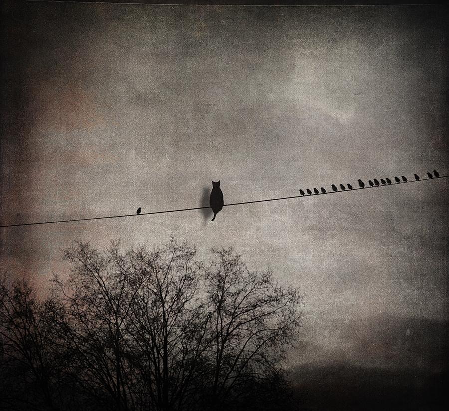 le chat avec les oiseaux by baspunk