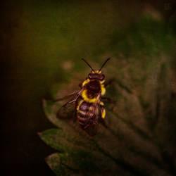 beard and bee