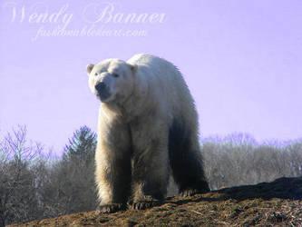 Majestic Polar Bear