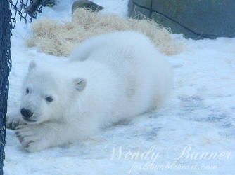 Playful Polar Bear Cub