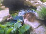 Water cat 003
