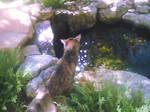 Water cat 004