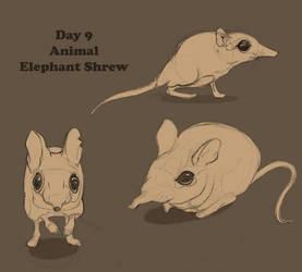 Day 9_Animal