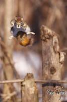 Superman Red Squirrel by Robin-Hugh