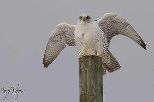Windy Perch