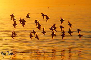 The Sunset Race by Robin-Hugh