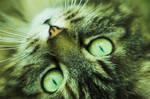 Adoration of a Cat