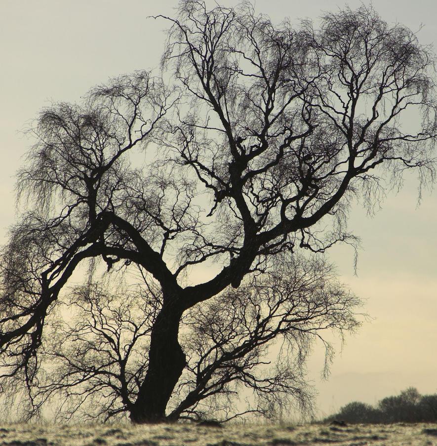 Winter Lace by Aconitum-Napellus