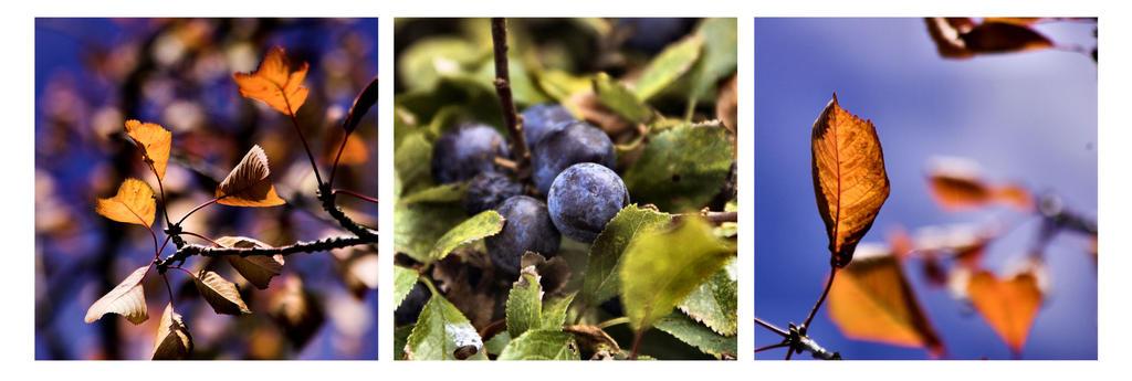Mellow Fruitfulness by Aconitum-Napellus