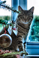 Christmas Inquistor by Aconitum-Napellus