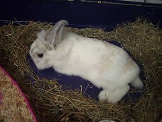 Hercules the Rabbit