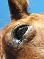Horse Eye by TheMissingHorse