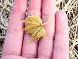 Tiny Leaf by TheMissingHorse