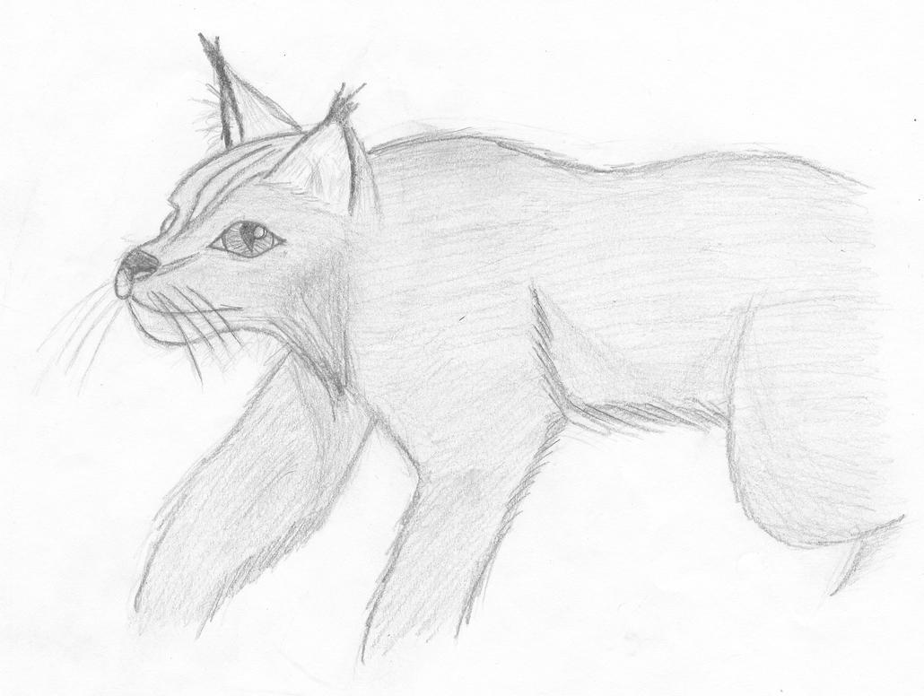 Lynx by SpyroOandOcynder