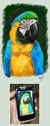 Parrot by mazhear
