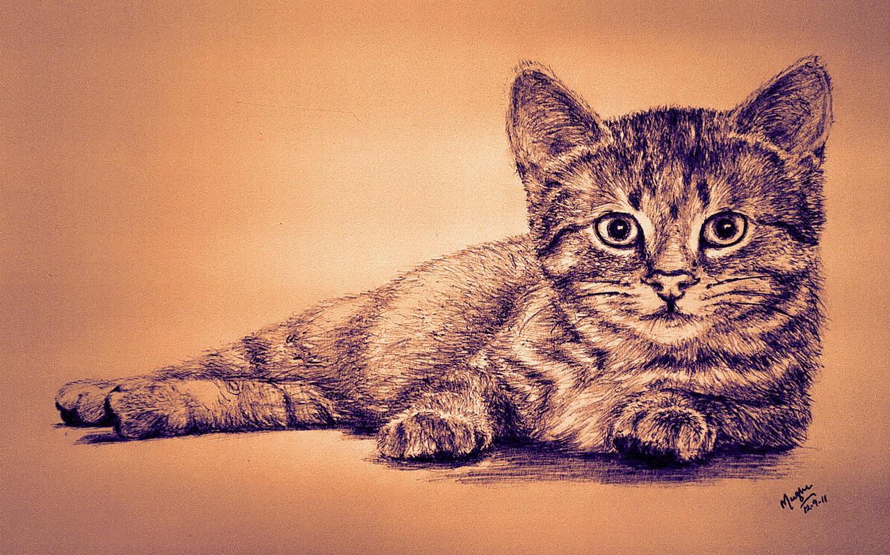 Cat by mazhear