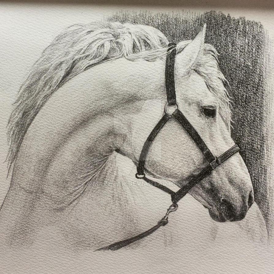 HORSE by mazhear