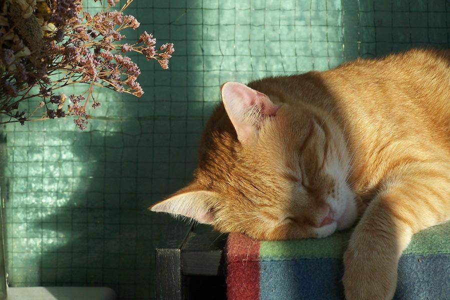 Sunny sleep by kate-kat