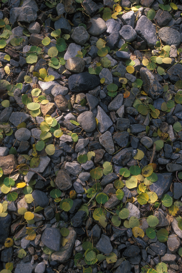 Rocks and Leaves by shagie