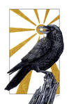 Crow Brings Daylight