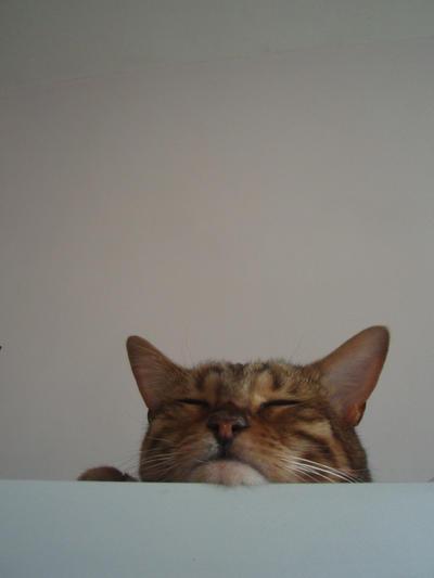 Kitten Buttons Dress It Up Jesse James  # 7683 Nine Lives Cat