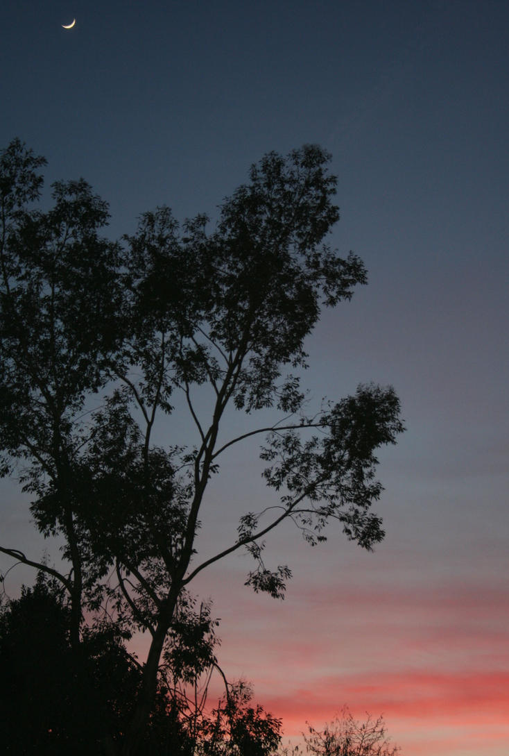 Stock - Night Sky by OghamMoon
