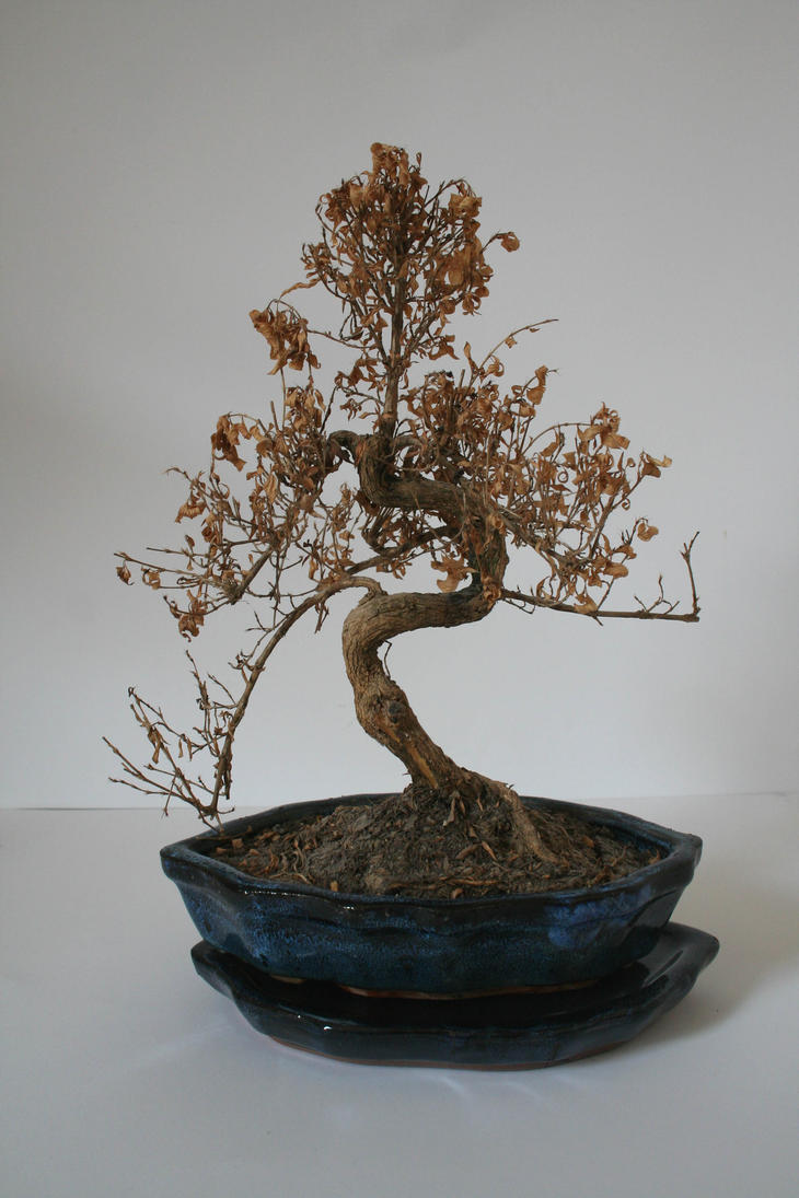 Stock - Dead Bonsai 2 by OghamMoon