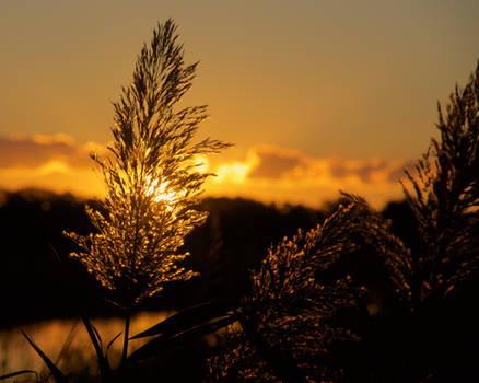 Marsh Grass Sunsrise