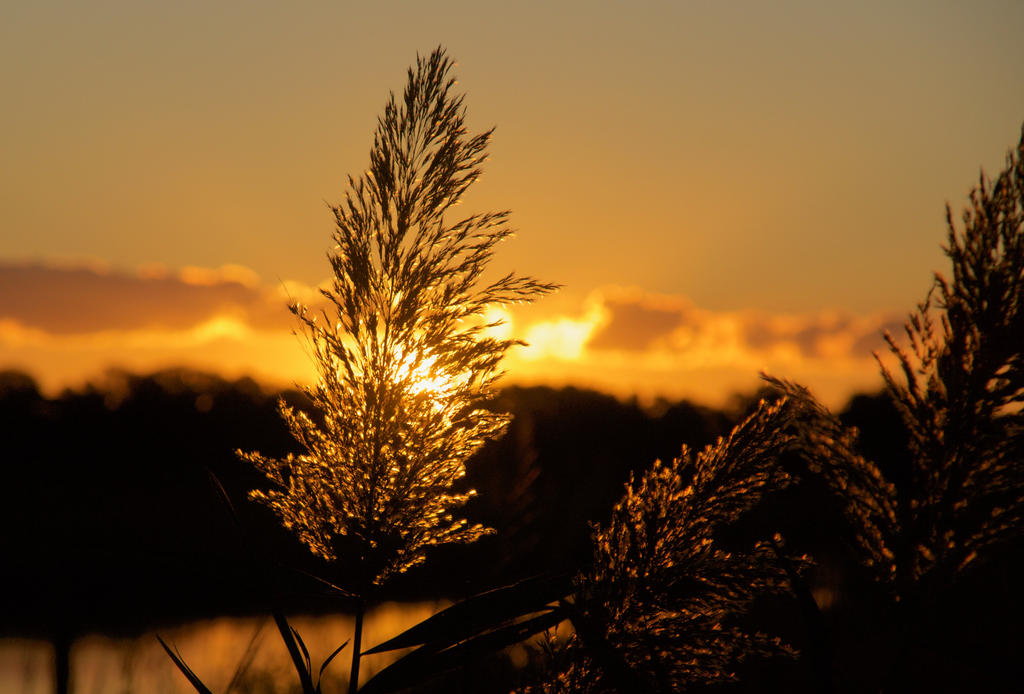 Marsh Grass Sunsrise  3:2 by wally626