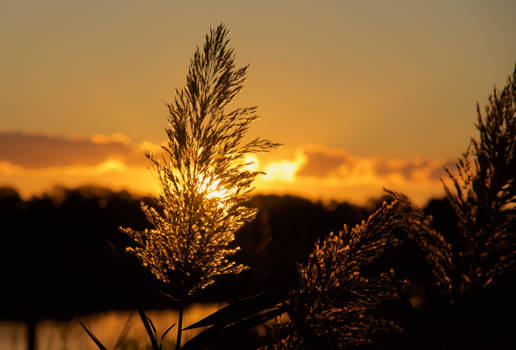 Marsh Grass Sunsrise  3:2