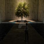 tree-box shadows