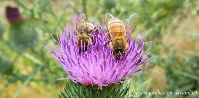 Honey Bee 27