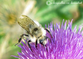 Bumblebee 29