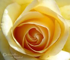 Rose Petals 32