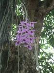 WILD ORCHID by Luckyjinx15