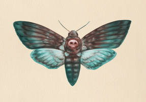 Death's-head Hawkmoth by Fiction69
