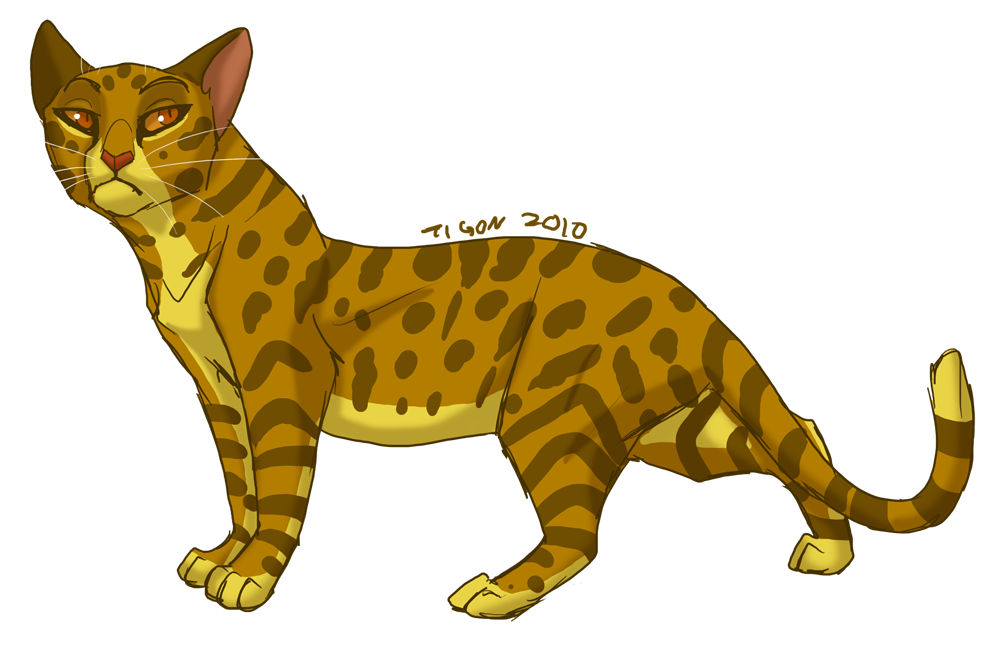 Leopardstar by tigon