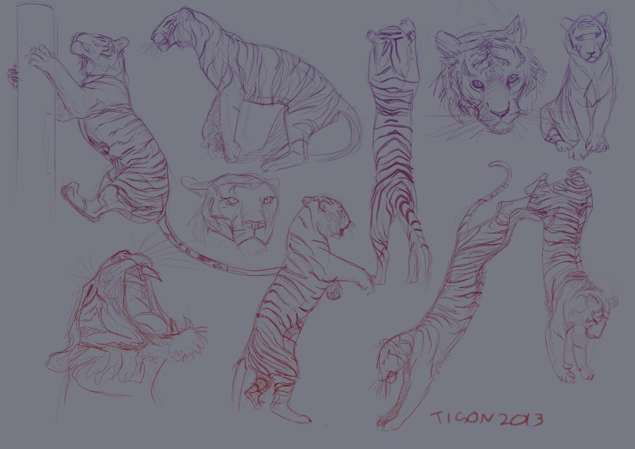 Tiger studies by tigon