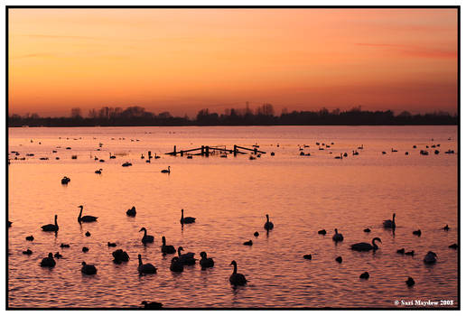 Sunset On The Flood Plain