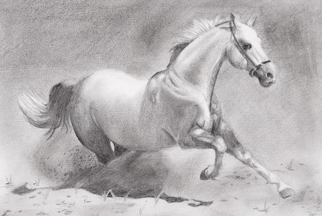 Inspirations: Nature, Horses on Pinterest   Running Horses ...